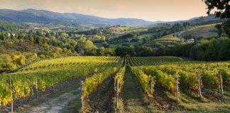 Wijngaarde in Italië