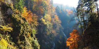 Zwarte woud