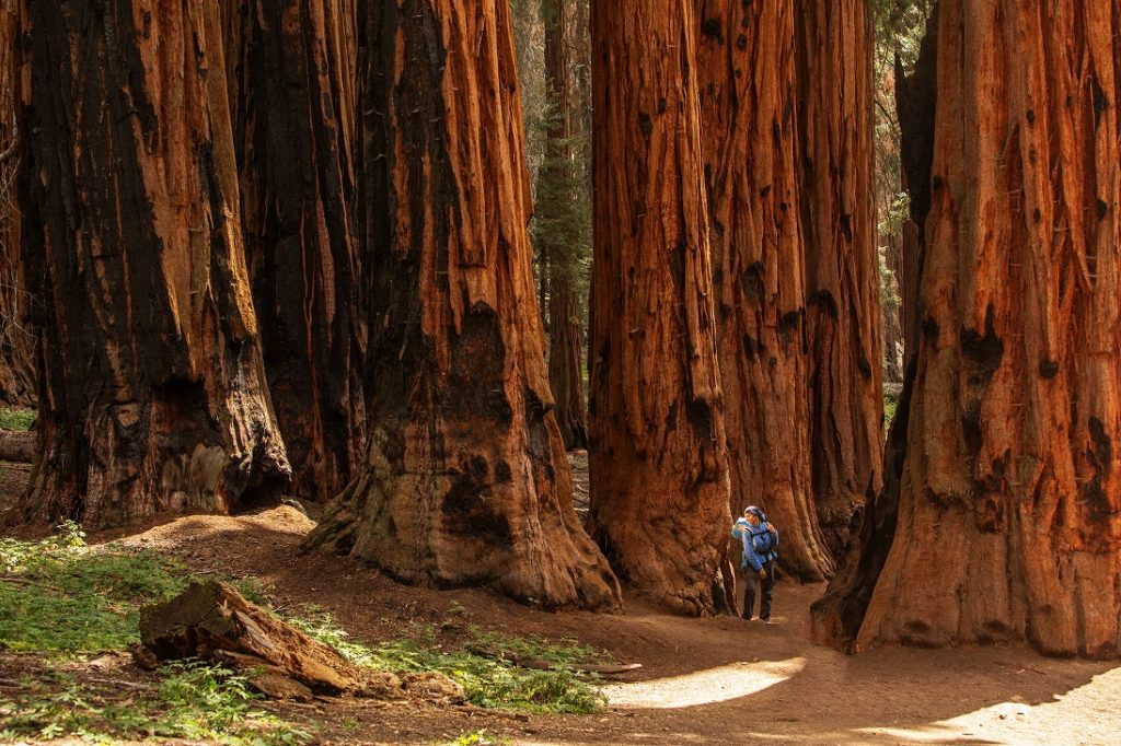 National Parks West-Amerika | Sequoia