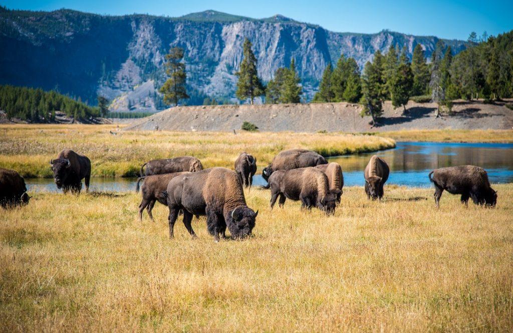 National Parks West-Amerika | Yellowstone